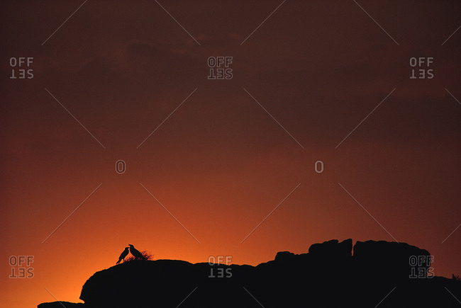 Silhouette of birds on rock formation