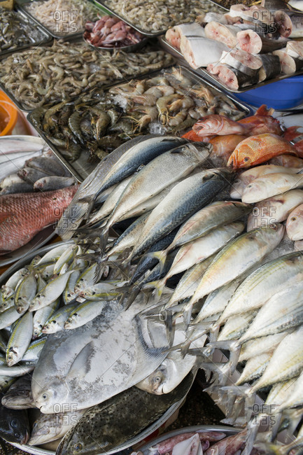 Market stall with fresh ocean fish