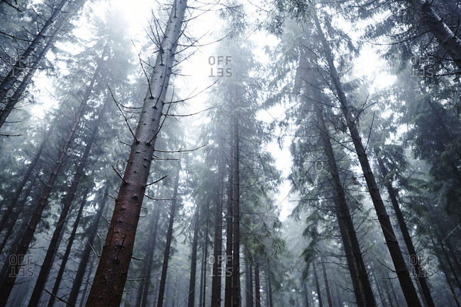 Low angle view of foggy forest