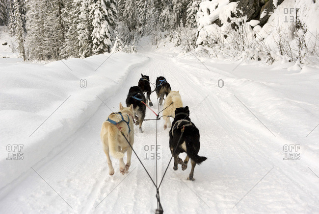 Rear view of dogs pulling a sled through snow
