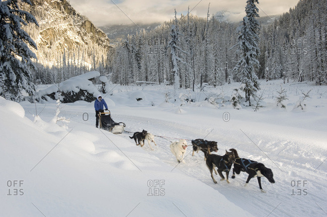 A man on a sled pulled by dogs through a snowy landscape