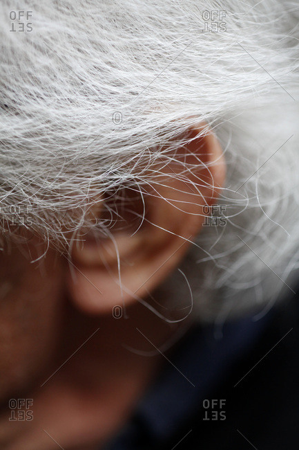 Detail of gray hair and an ear