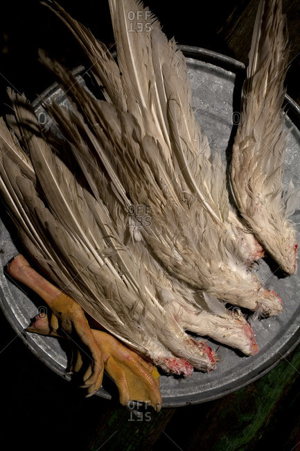 An arrangement of various pairs of goose wings and one pair of goose feet on a barrel