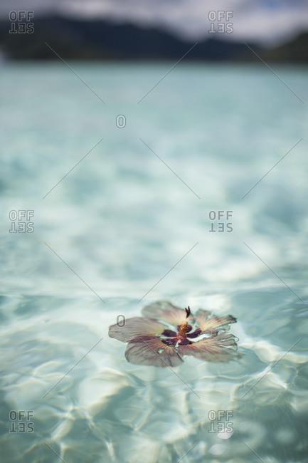 Flower floating in clear ocean water