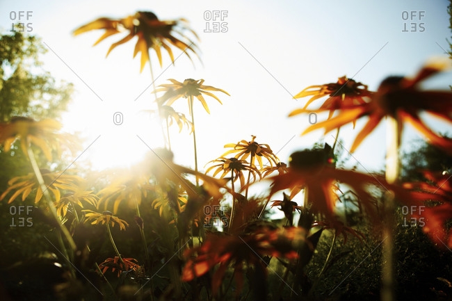 Low-angle view of flowers in sunny afternoon