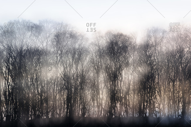 Mysterious landscape with bare trees