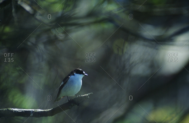 Small tit sitting on branch