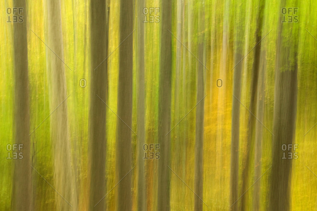 Blurred forest background in autumn