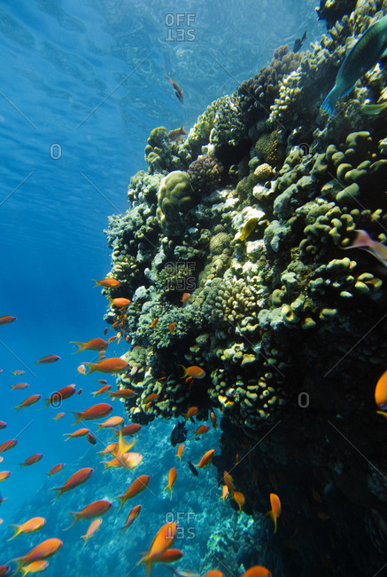 School of fish swimming next to coral reef