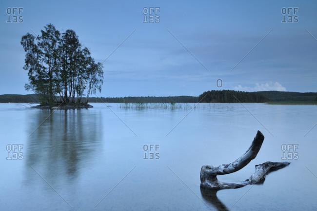 Forest lake with driftwood at dawn