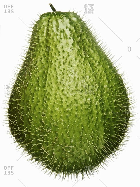 A prickly chayote
