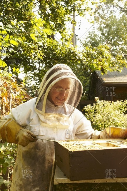 Beekeeping outside from the Offset Collection