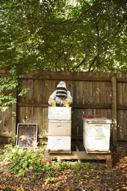 Woman Bee Keeper