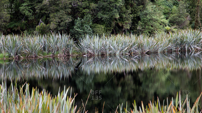Green trees reflected on calm water