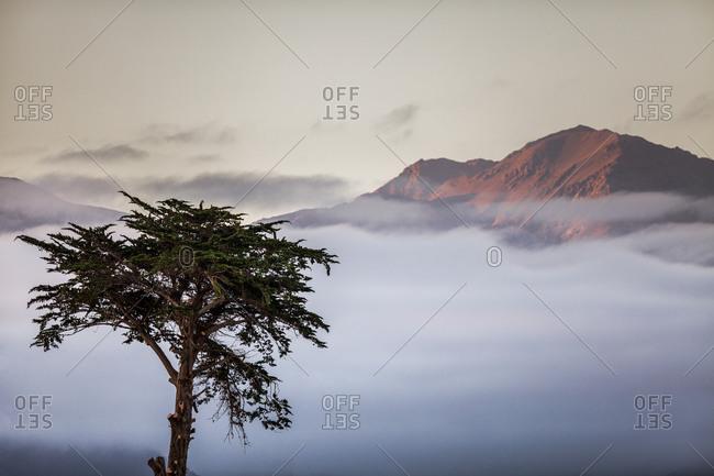 Cloudy mountain top with lone cedar tree