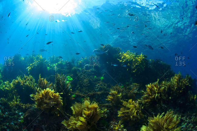 Fishes swimming in sunlight underwater