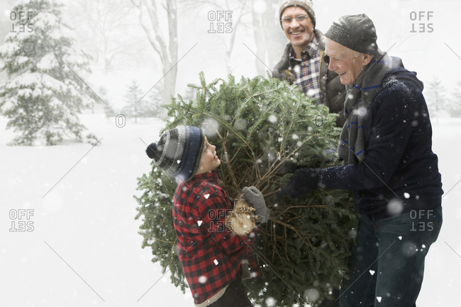 Caucasian family carrying Christmas tree through the snow