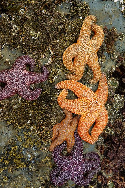 Starfish on rocky beach