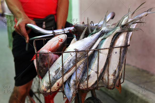 Man with freshly caught fish in bicycle basket