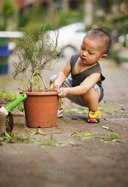 Little boy works in home garden
