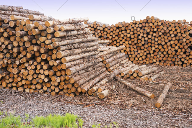 Logs stacked on ground
