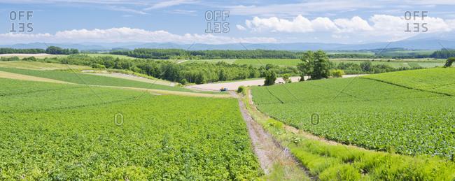 Field of crops in Biei, Hokkaido, Japan.