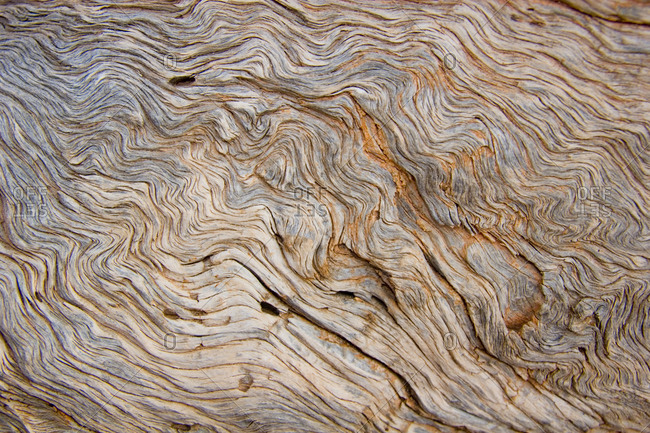 The bark of a pine is exposed showing the wavy wood grain