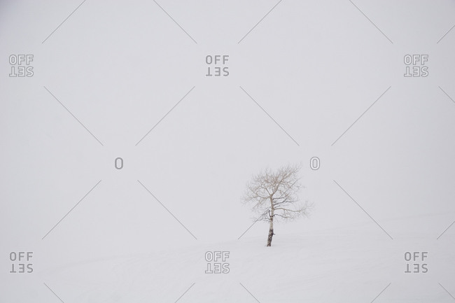 A tree stands alone in the white of a snowstorm