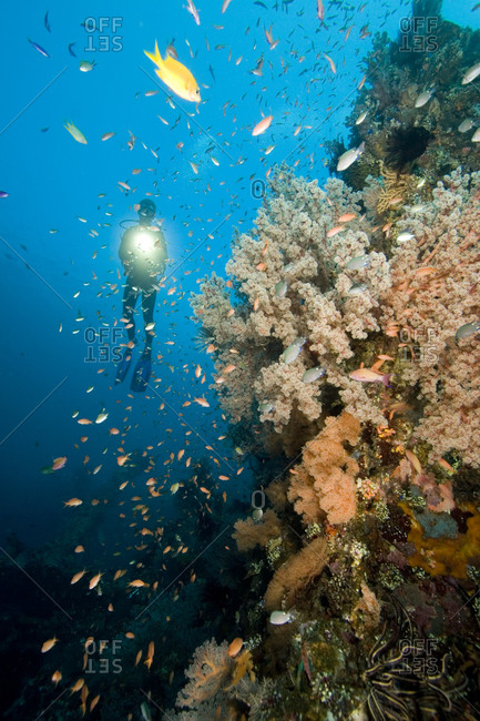 A diver explores soft corals and schools of fish on a coral reef