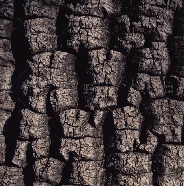 Close up of shea tree bark