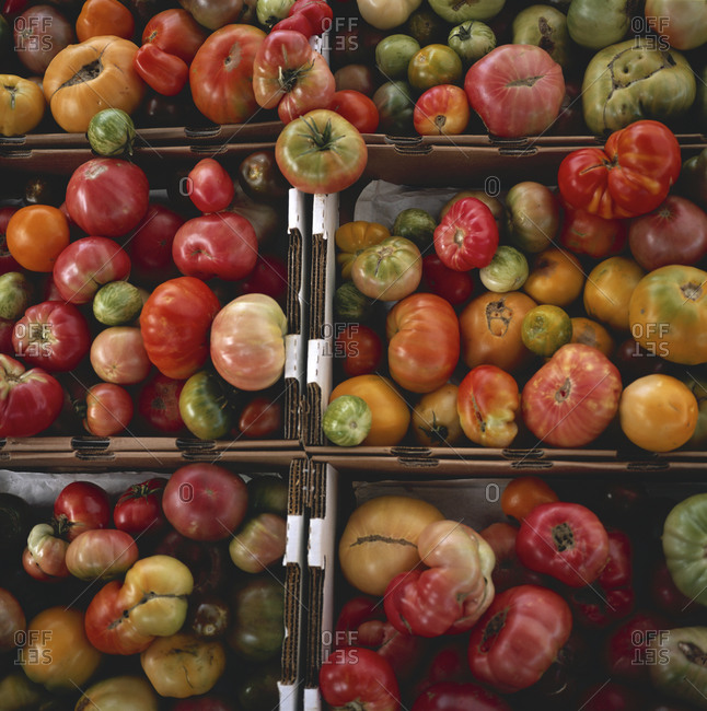 United States, Mill Valley: Tomatoes in a box in Mill Valley