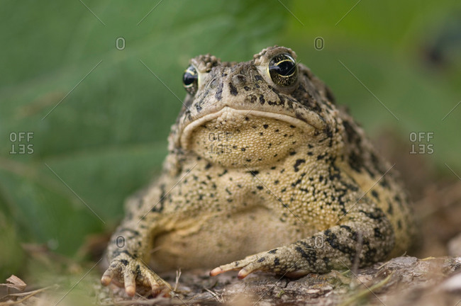 A toad appears to be frowning