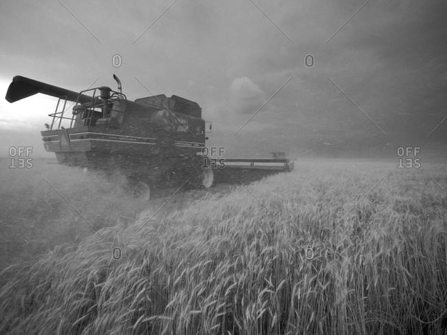 United States, Kansas: Kansas wheat being harvested at dusk during summer