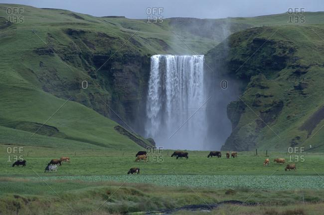 Iceland: Skogafoss, South Iceland