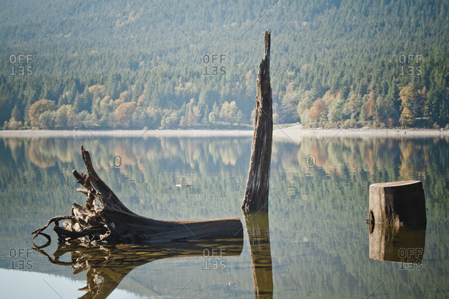 Alouette Lake Forestry