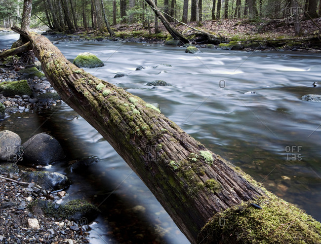 A small river meanders past a fallen tree