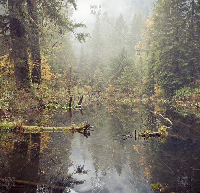 Environment / Nature