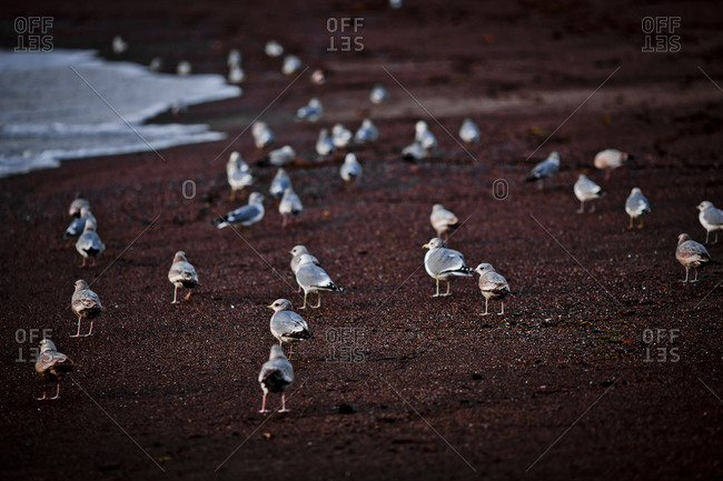 Flock of seagulls on sandy beach