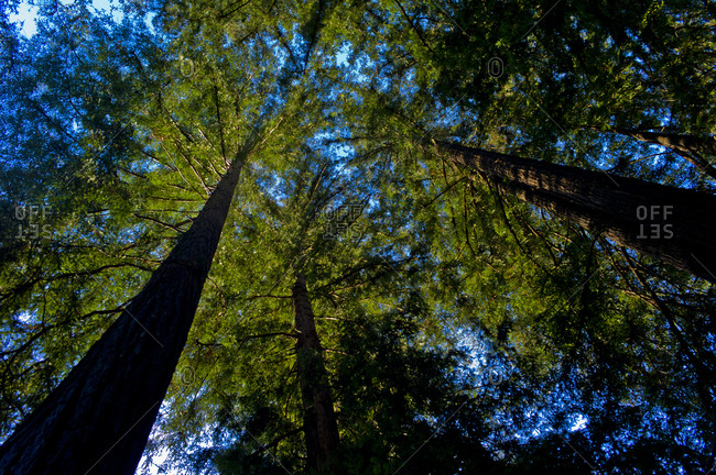 Low angle view of trees in a forest
