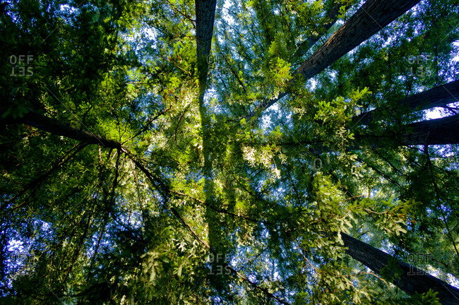 Low angle view of forest canopy