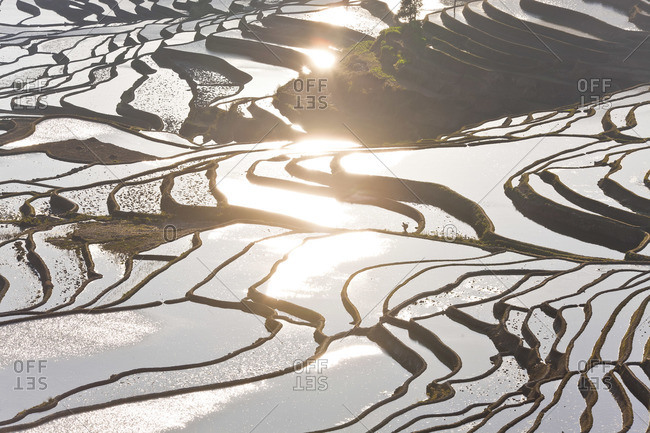 Reflections of water filled rice terraces, Yuanyang County, Honghe, Yunnan Province, China