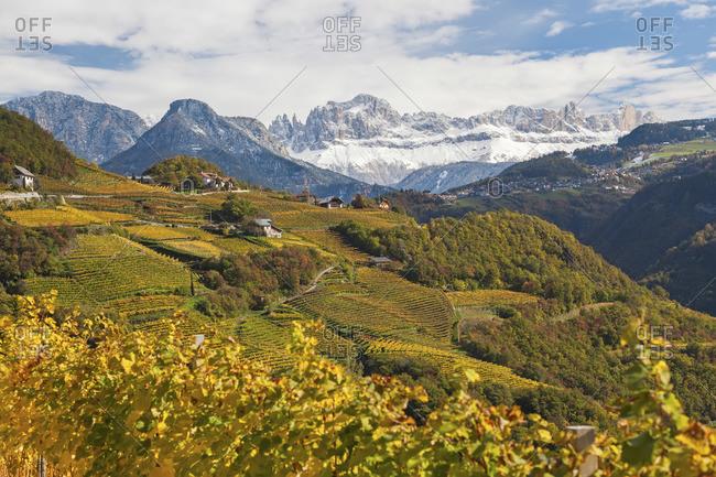 Vineyards near Bolzano, Trentino-Alto Adige, Italy