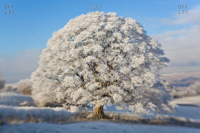 Frosted snow covering trees in near Dursley, Cotswolds, Gloucestershire, UK