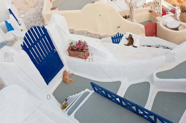Cats lying on the streets of Oia, Santorini, Greece