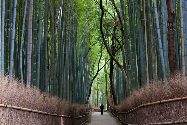 Man walking through bamboo forest in Kyoto, Japan