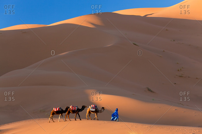 Camel train at Erg Chebbi, in the Sahara Desert