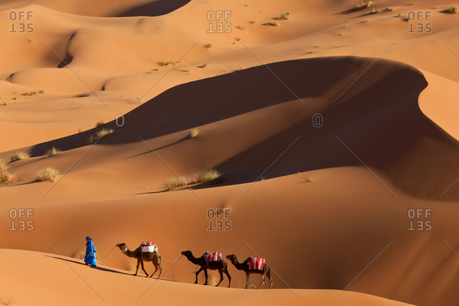 Camel train at Erg Chebbi, in the Sahara Desert