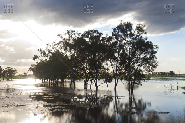 Trees and flooded creek, near Rockhampton, Queensland, Australia