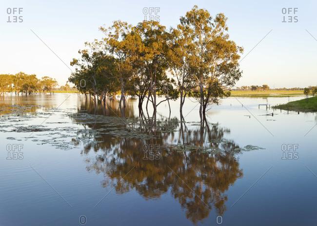 Trees & flooded creek, nr Rockhampton, Queensland, Australia