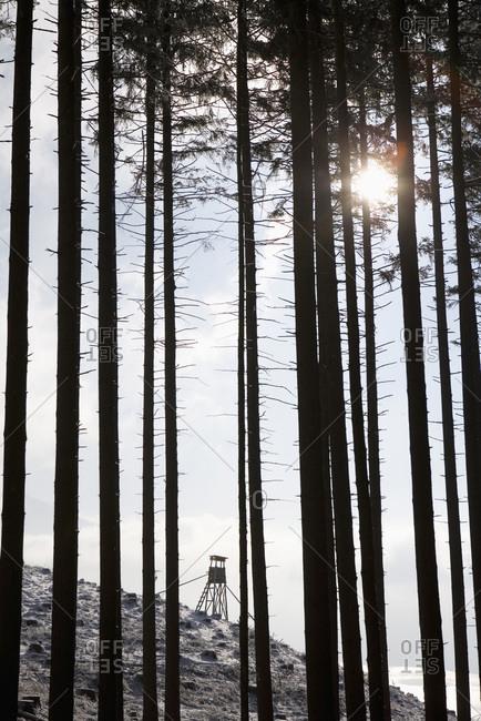 Austria, Salzkammergut, Mondsee, Raised blind in coniferous forest